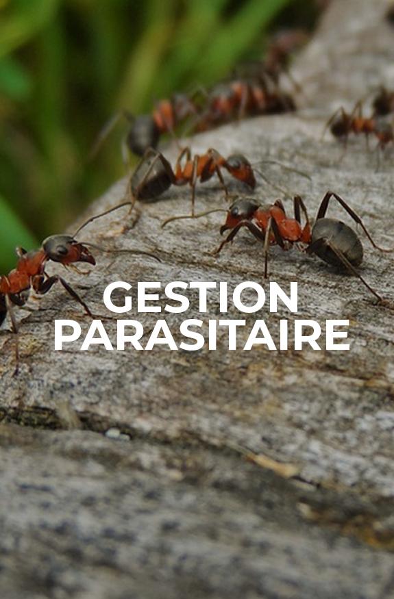 gestion parasitaire